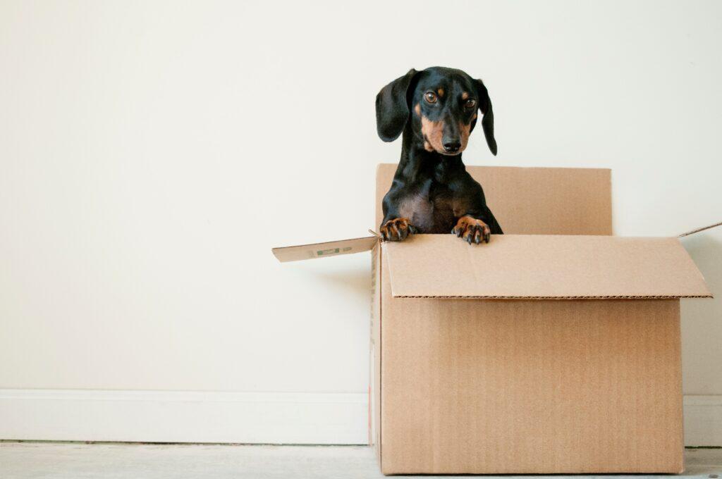verhuizen checklist hond